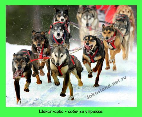 Упряжка для собаки фото