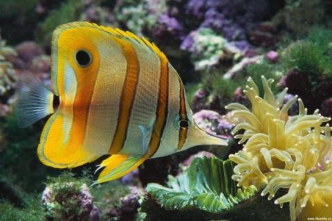 Самые радостные и веселые ... рыбки!