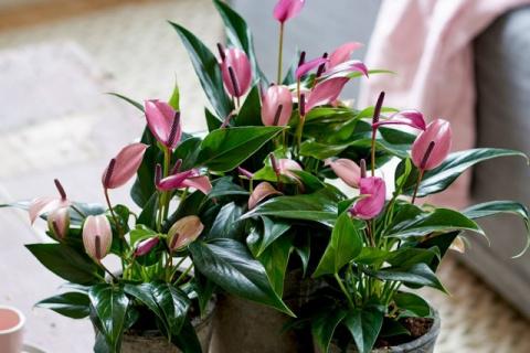 Лучшие комнатные растения с …