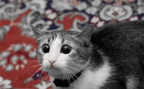 Презабавная история про хитрюгу-кота, который таки отвоевал себе спокойную жизнь