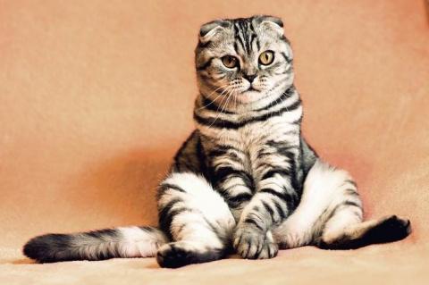 Дети уговорили купить дорогущую кошку. Красавица еще та, но дура дурой...