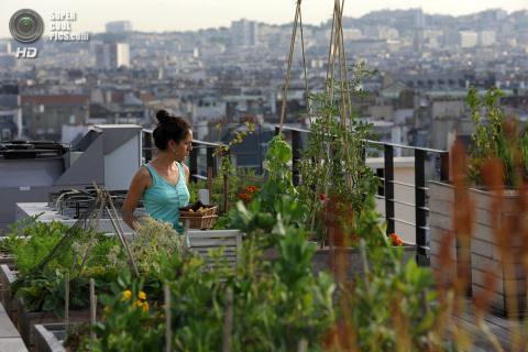 Грядки на парижских крышах