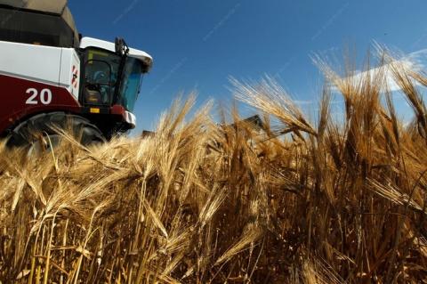 За Краснодаром - Ставрополье. В крае собрали рекордный урожай зерновых