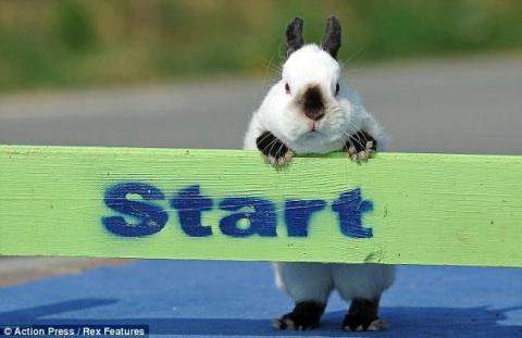Фотографии с соревнований кроликов