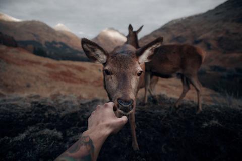 Природа Шотландии в фотограф…