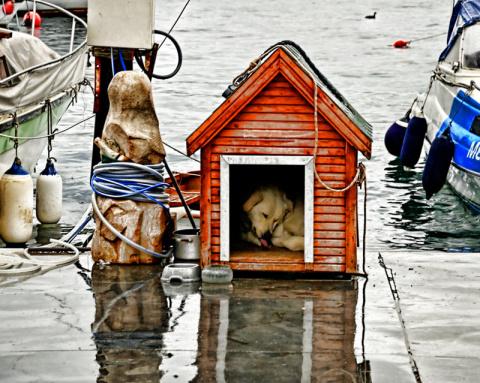 Необычные архитектурные решения для собачьей конуры