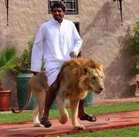 30 до неприличия роскошных фото из Дубая