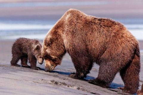 Медвежонок был на волоске от смерти, но на помощь пришел ОН! Поразительная история спасения