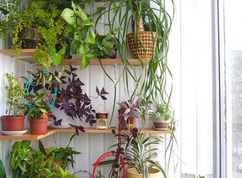 Зимний сад в квартире: оранж…