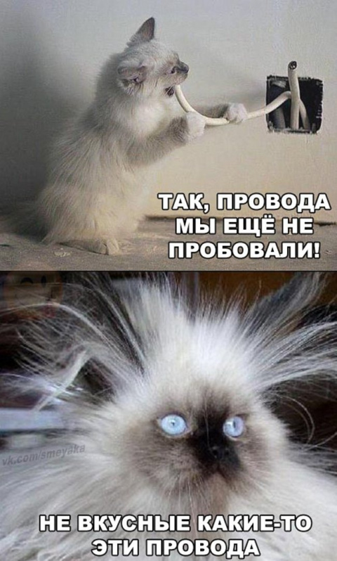 Один вид этих котов поднимает настроение)