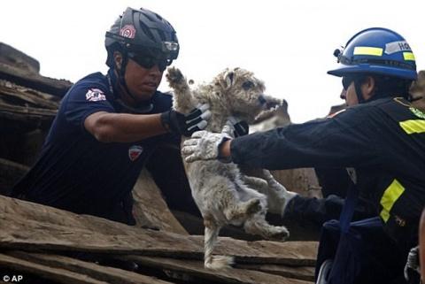 Эти люди рисковали жизнью, чтобы спасти животных