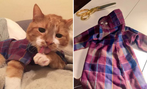 Самый модный кот: девушка шь…