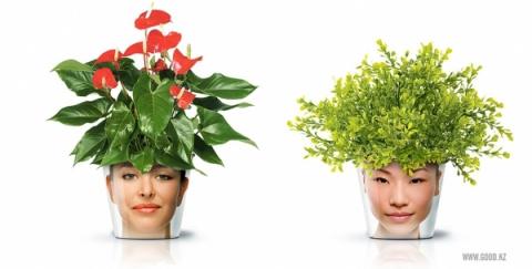 Голова садовая ;)