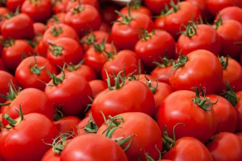 Турецкие помидоры могут пуст…