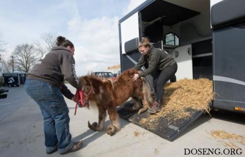 Волонтеры спасли лошадь и по…