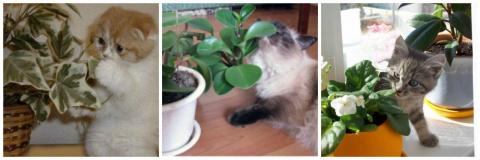 Если кошка ест цветы