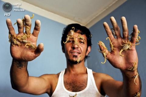Скорпионы - опасные домашние питомцы