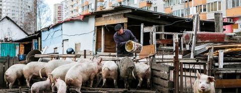 Обратный ход: Украина возвращается обратно в село