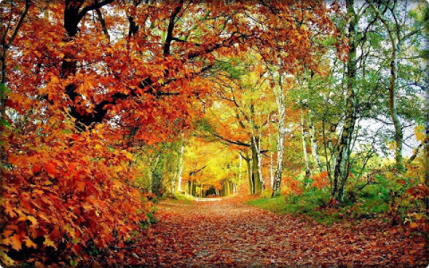 Мотивы Осени