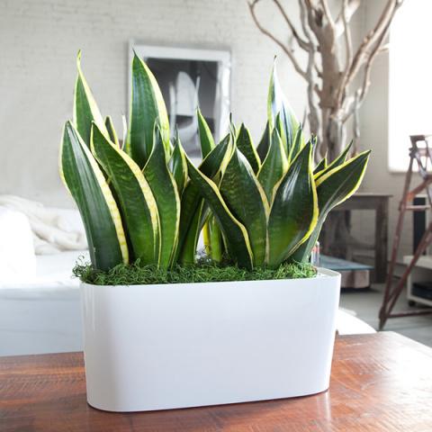 7 могучих растений, которые полностью очистят воздух в твоем доме