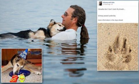 История самой трогательной фотографии с собакой
