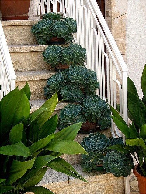 Садово-дачные красивые идеи