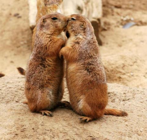 Поцелуйчики животных