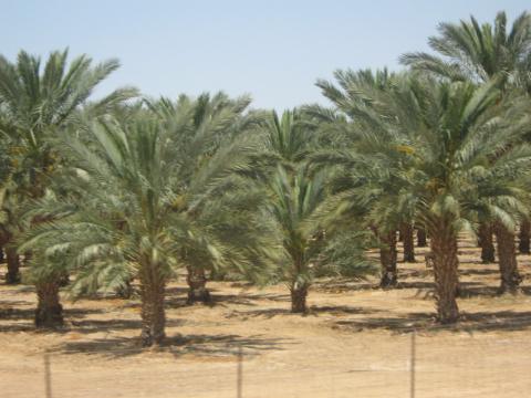 Валери Элит в Израиле. Проект Valery-Elite travel.