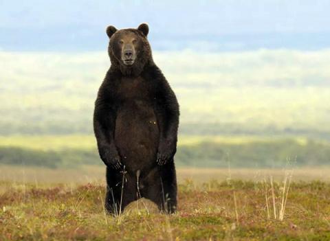 Превед медвед! Инструкция по…