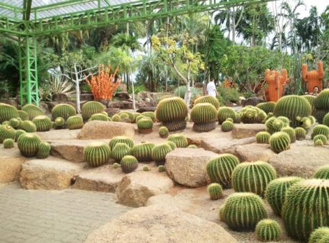 Кактусы в тропическом парке Нонг Нуч