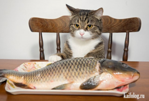 Удивительные фото с котами, сплошной позитив))
