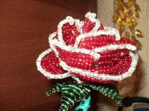 А это моя первая роза, моя гордость