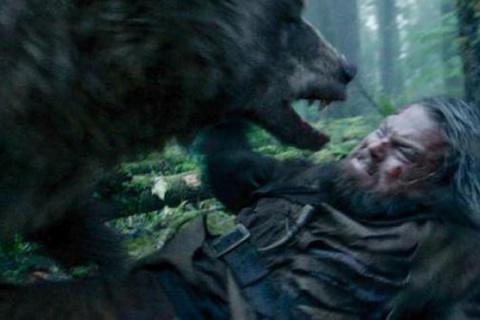Медведь напал на уральского грибника… Бедный мишка!