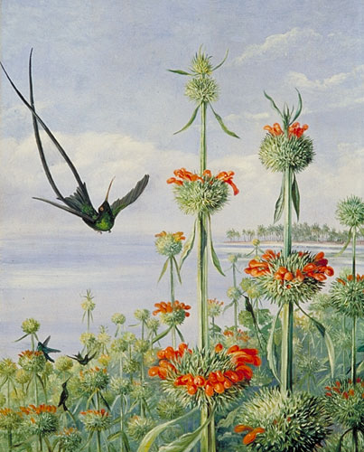 Экзотические цветы и растения МЕРИЭНН НОРТ
