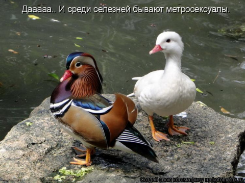 http://mtdata.ru/u29/photoCB36/20628425488-0/big.jpeg