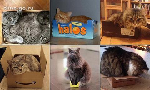Кошки икоробки: имнельзя д…