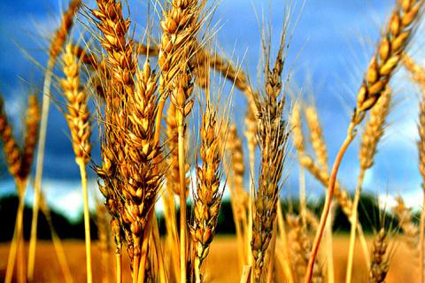 Продовольственная безопасность России – условие стабильного развития страны!