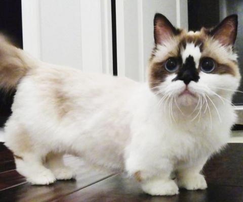 Кот по кличке Альберт — еще …