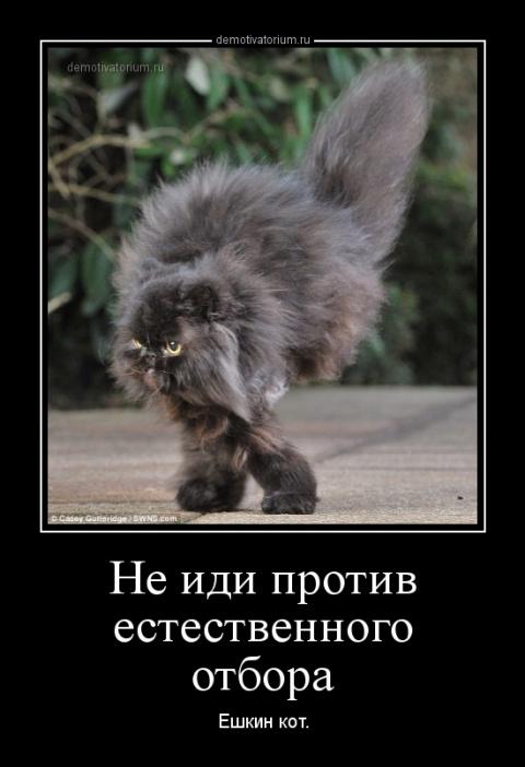 С детства мечтаю увидеть трех животных: сидорову козу, ёшкиного кота и бляху-муху)))