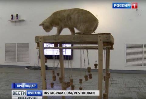 Краснодарских котов приобщили к искусству