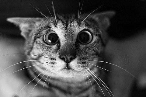 Увидел кот убитую им крысу... его истерику не передать словами...