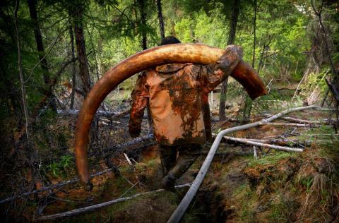 Нелегальная добыча бивней мамонта