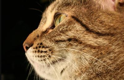 В Финляндии хозяйку 40 кошек суд оштрафовал за плохой уход за животными