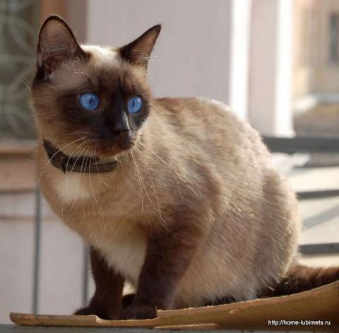 Породы кошек по знакам Зодиака. Чем и как кормить птиц зимой?