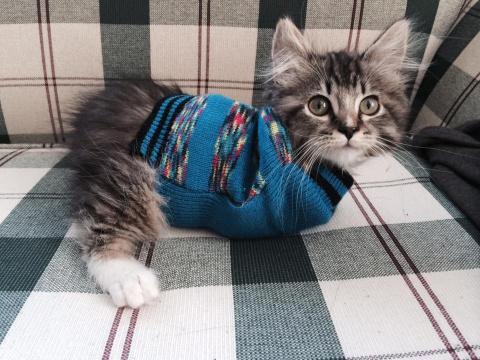 Кошка, у которой всего две л…
