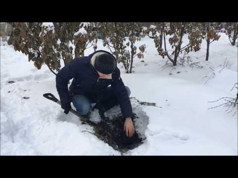Есть ли жизнь под снегом?