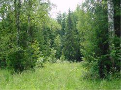 """Кто в лес, кто по дрова. Россияне не до конца поняли суть """"лесной амнистии"""""""