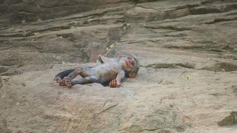 Душераздирающая история о том, как обезьяны приняли в семью робота, а потом оплакивали его смерть