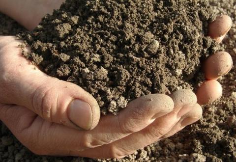 Как выяснить, достаточно ли в почве влаги