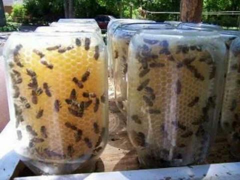 Мёд сразу в банках? Гениальное решение для тех, кто решил заняться пчёлами